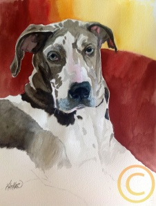 Great Dane, Oakley