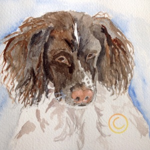 Brittany Spanielimage